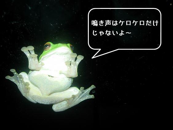 【中止】カエル語で話そう